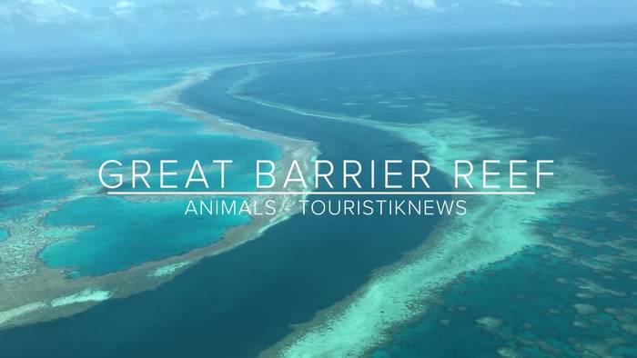 News video: Artenreichtum! Über 1500 Fischarten im great Barrier Reef