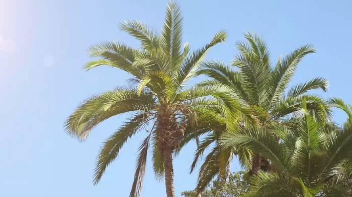 News video: Klimawandel: Palmen wachsen in Österreich - bald auch in Deutschland?