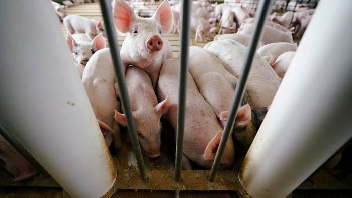 News video: Schweinepest: Bulgariens Ministerpräsident beschuldigt Rumänen