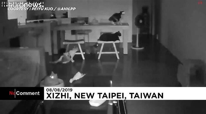 News video: Erdbeben schreckt Katzen auf