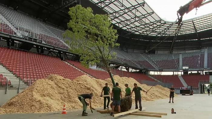 Video: Mahnmal in Stadion: Ein Wald entsteht