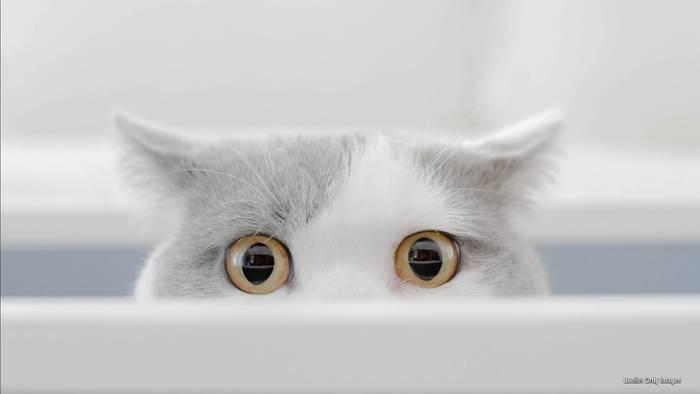 """News video: Happy """"Weltkatzentag""""! Über diese Star-Miezen lacht das Netz"""