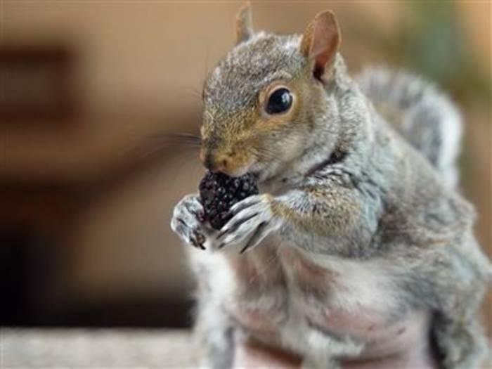 Video: Dieses Eichhörnchen hat 168.000 Follower