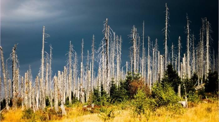 Video: Dürre, Brände, Schädlinge: 120.000 Hektar deutscher Wald tot
