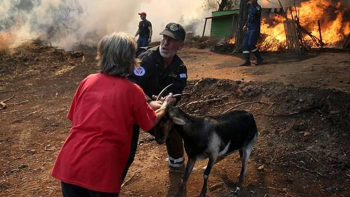 Video: Euböa im Ausnahmezustand: Tausende Tiere verbrannt