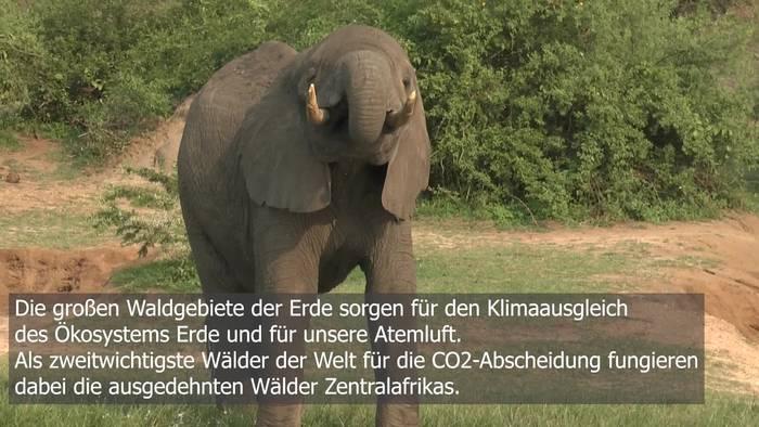Video: Elefanten und CO2