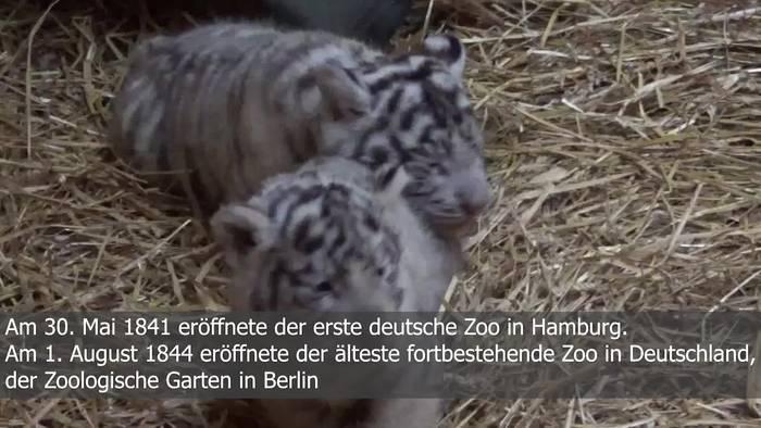 Video: Einige Facts über unsere Zoos