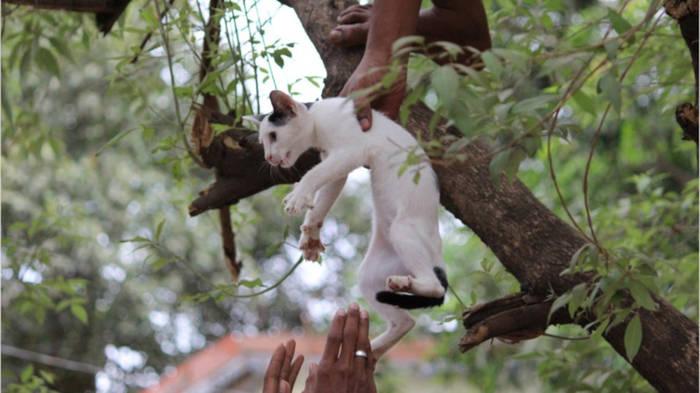 Video: Rettung aus den Baumkronen: Tom & Shaun helfen kleinen Kätzchen