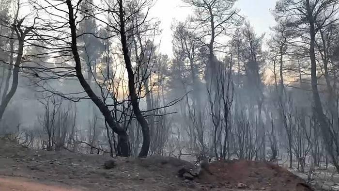 Video: Waldbrände in Griechenland: Gefahr noch nicht gebannt