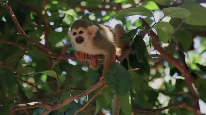 Video: WWF schlägt Alarm: Tierbestände sinken drastisch!