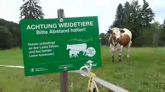 Video: Bayerische Bauern warnen Wanderer: Weg von den Kühen!