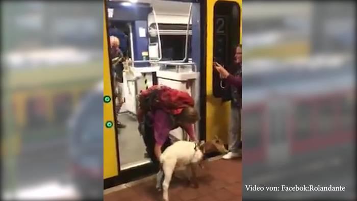 News video: Tierische Fahrgäste: Ziege und Esel mit im Zug!
