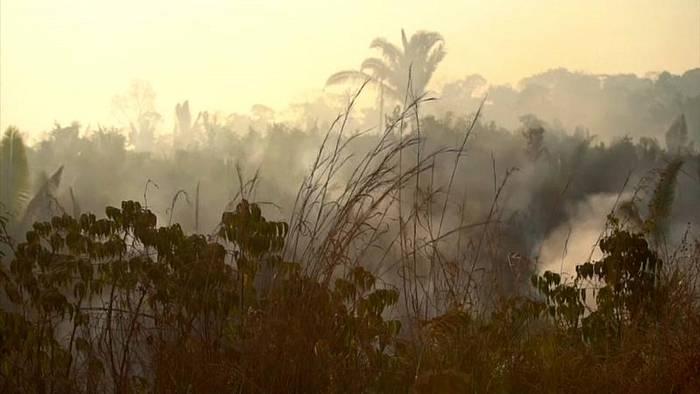 Video: Kampf um die Amazonas-Wälder