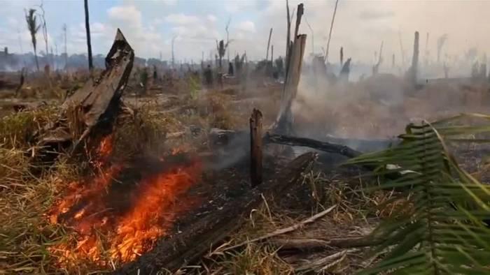 News video: Brasilien: Spagat zwischen Umweltschutz und wirtschaftlicher Entwicklung