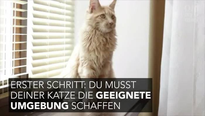 News video: Mit diesen Tricks wird auch deine Katze zur Schmusekatze!