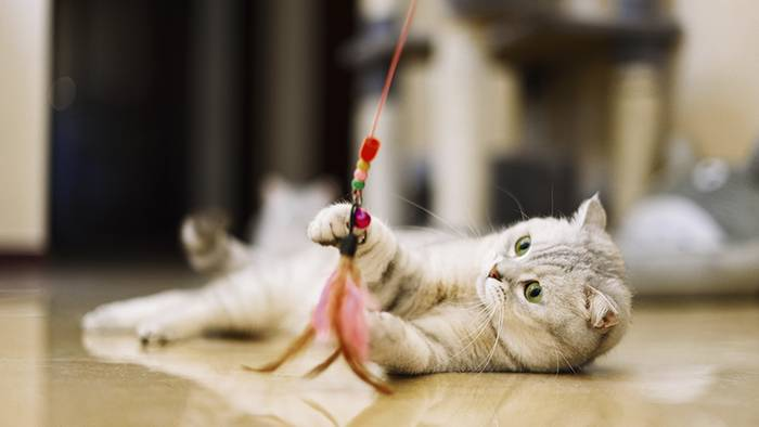 News video: Katzenspielzeug: Diese fünf Gegenstände sind für eure Katze gefährlich