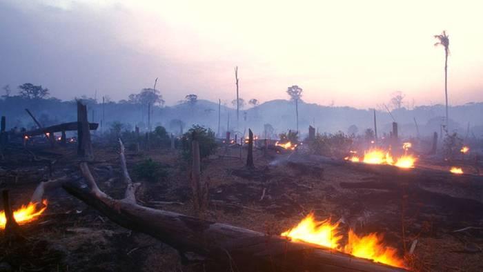News video: Amazonas: Die grüne Lunge der Erde steht in Flammen