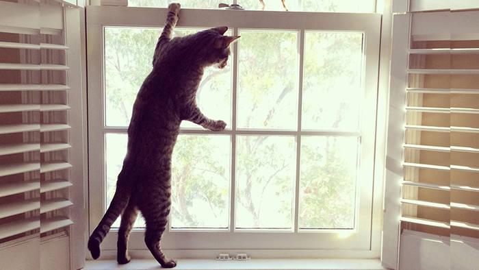 News video: Aus diesem Grund sollte man Katzen niemals mit gekipptem Fenster alleine lassen