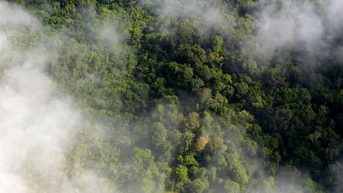 News video: Brände im Amazonas: Diese schrecklichen Bilder zeigen, wie viel Kohlenmonoxid in die Atmosphäre entweicht
