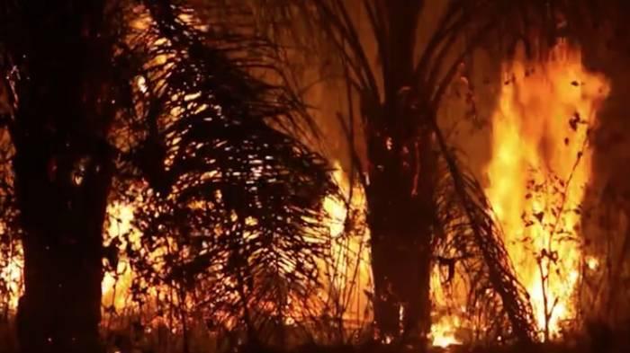 Video: Amazonas-Brände: Brasilien lehnt 20 Millionen Dollar G7-Hilfe ab