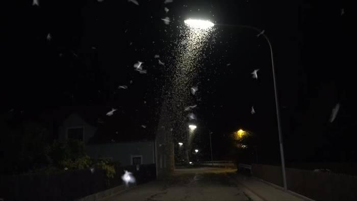 News video: Grusel in Bayern: Zentimeterhoch tote Fliegen auf der Straße