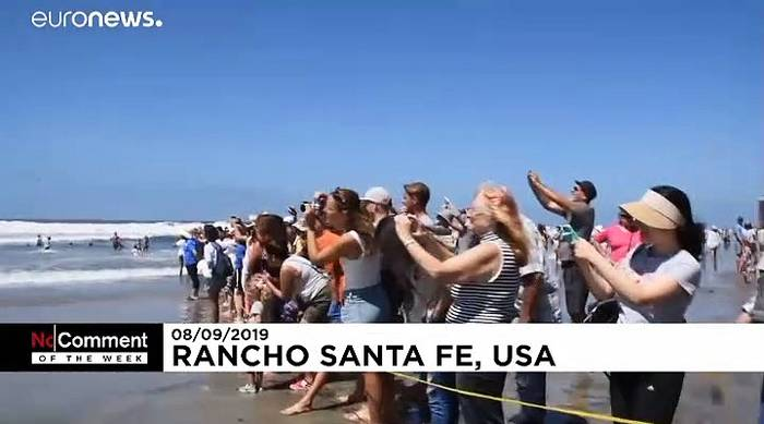 News video: No Comment der Woche: Surfer-Hunde,