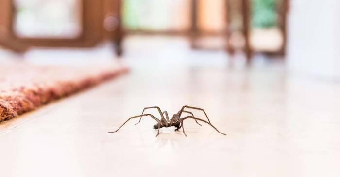 News video: Darum krabbeln Spinnen immer um 19:35 Uhr in deine vier Wände