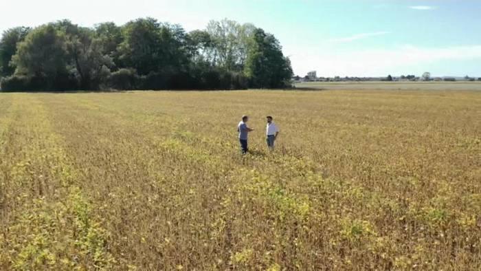 News video: Regenwaldkiller Soja: Ist der Anbau in Europa die Lösung?