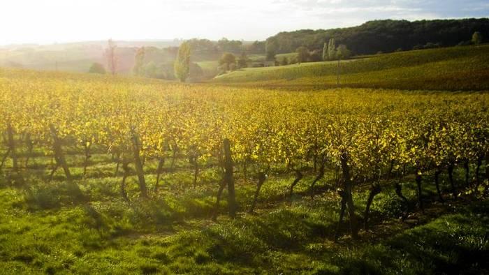 News video: The Brief from Brussels: Klima, Landwirtschaft, Strom-Deal, Lagarde