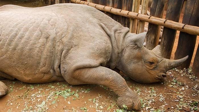 News video: Zoo ist fassungslos: Besucher ritzen ihren Namen in den Rücken eines Nashorns