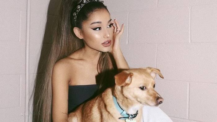 Video: Angeschlagene Ariana Grande: Sie lässt ihre Hunde mit dem Privatjet rumfliegen