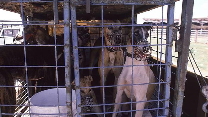 Video: Animal Hoarding: Das Messie-Syndrom, dem 3.000 Tiere jährlich zum Opfer fallen