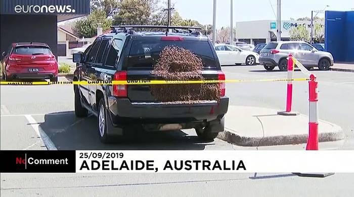 News video: Bienen-Invasion am Autoheck