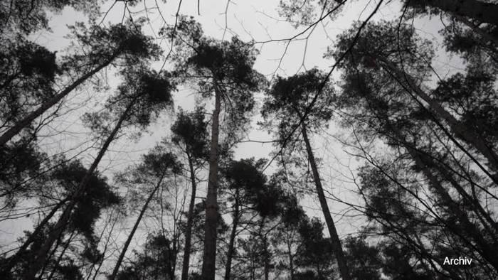 Video: Klöckner: Bis zu 800 Millionen Euro für den deutschen Wald