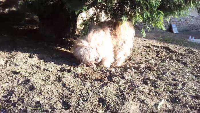 Video: 500 Millionen Hunde feiern Welthundetag