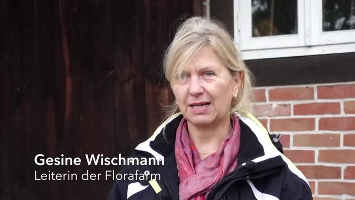 News video: Lüneburger Heide: «Königin der Heilpflanzen» in Gefahr