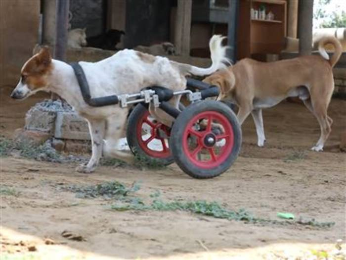 Video: Rührend: Hier finden kranke Hunde ein neues Zuhause