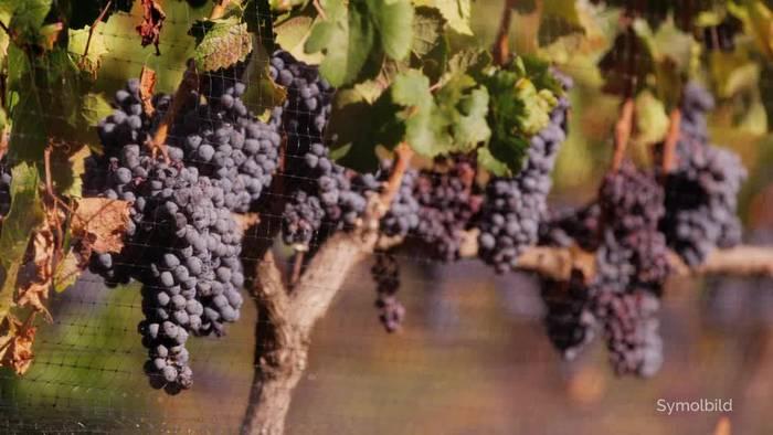 News video: Käse, Wein, Olivenöl: US-Strafzölle auf EU-Importe in Kraft