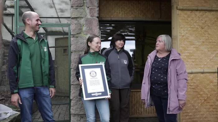 News video: Ältestes Faultier der Welt: Paula kommt ins Guinness-Buch