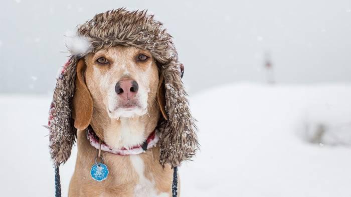Video: So schützt du deinen Hund im Winter am besten vor Kälte