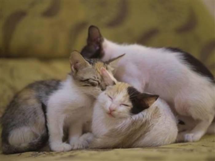 News video: Frau hat 30 Katzen bei sich aufgenommen