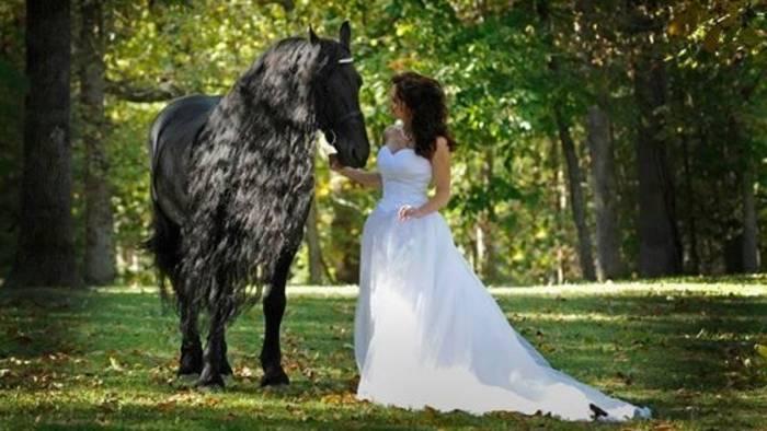 News video: Dieses Pferd soll das schönste der Welt sein: Seht, wie es sich in der Sonne bewegt!