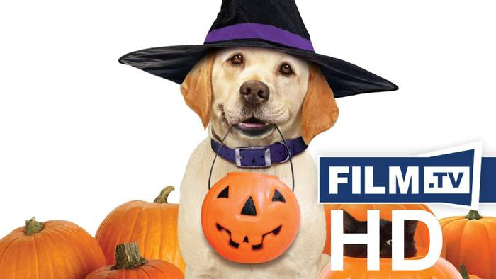News video: Ein Hund Rettet Halloween Trailer Deutsch German (2013)