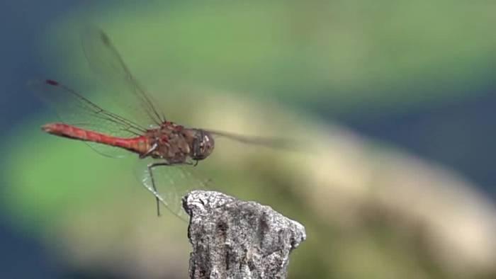 News video: Insektenschwund: Was tun gegen das stille Sterben?
