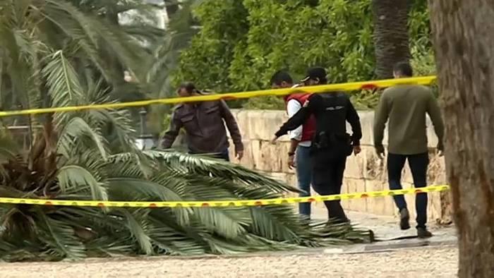 News video: Mallorca: 37-Jährige von Palme erschlagen