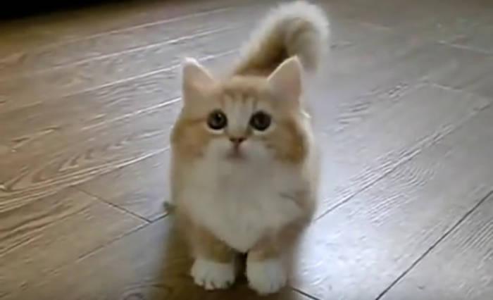 News video: Das Kätzchen blickt in die Kamera, dann tut die Besitzern etwas Unerwartetes