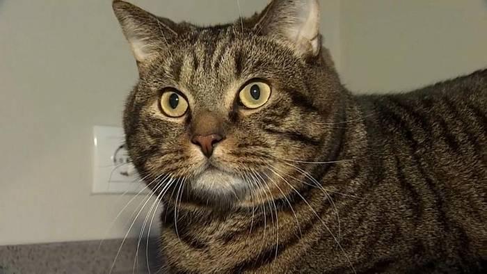 News video: Flugsicherheit: 10 Kilo Katze sind 2 zuviel