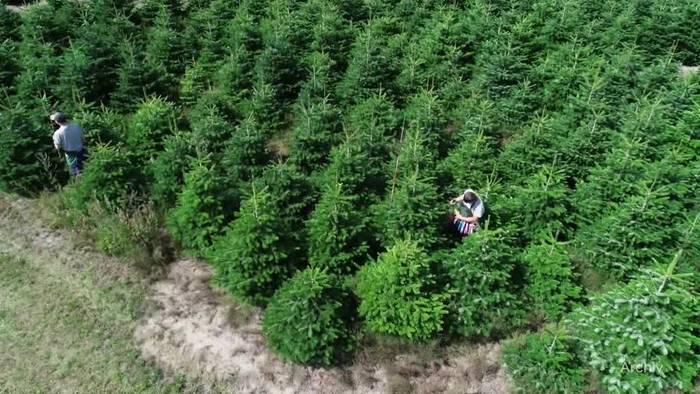 Video: Weihnachtsbaumverkauf startet: Ökologie wird zum Thema