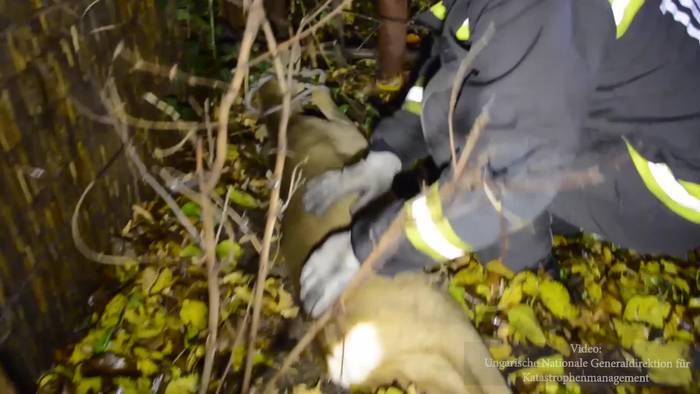 Video: Feuerwehreinsatz: Rehrettung mit Streicheleinheiten!