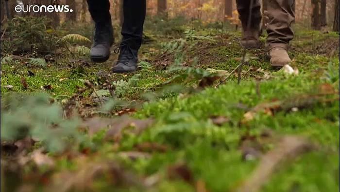 Video: Waldsterben in Deutschland - Klimawandel macht sich bemerkbar